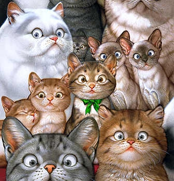 Кошки приучение кошки к лотку как