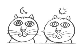 Зрачок при дневном свете он у кошки не